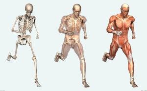 human_body_Facts